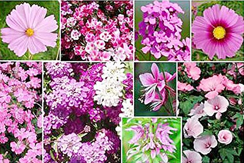 Pink Mixed Wildflower Seed - Annuals and Perennials Sun and Limited Shade