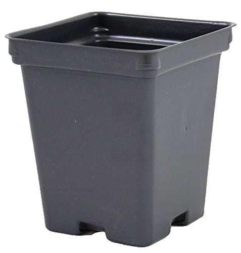 Square Greenhouse Pots 425 inch x 4875 inch- Black - Plastic - Deep - Case of 375 by Growers Solution